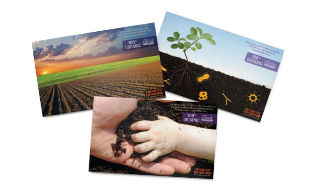 Purple Cow Organics - Direct Mailer Designs