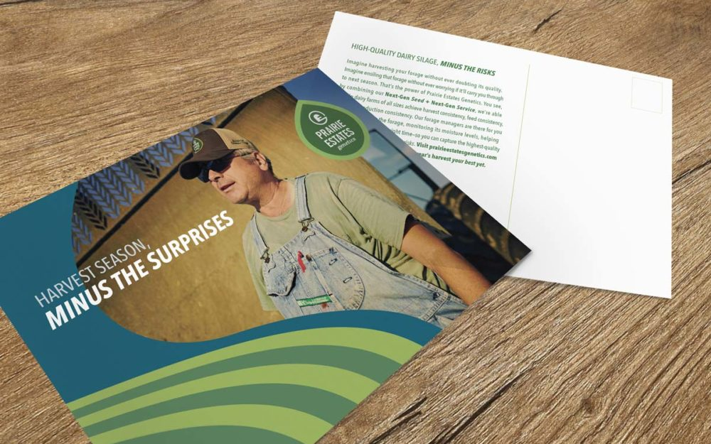 Prairie Estates Genetics - Direct Mailer Graphic Design